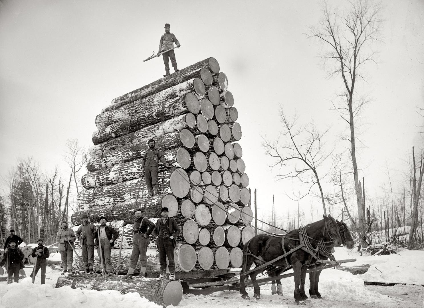 Early colonial logging